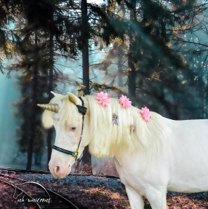 Magical forest - wonderland